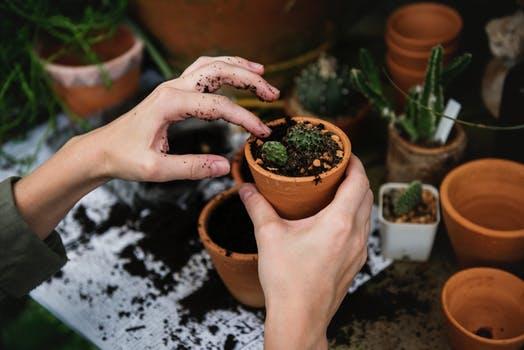 coltivare le piante rilassa